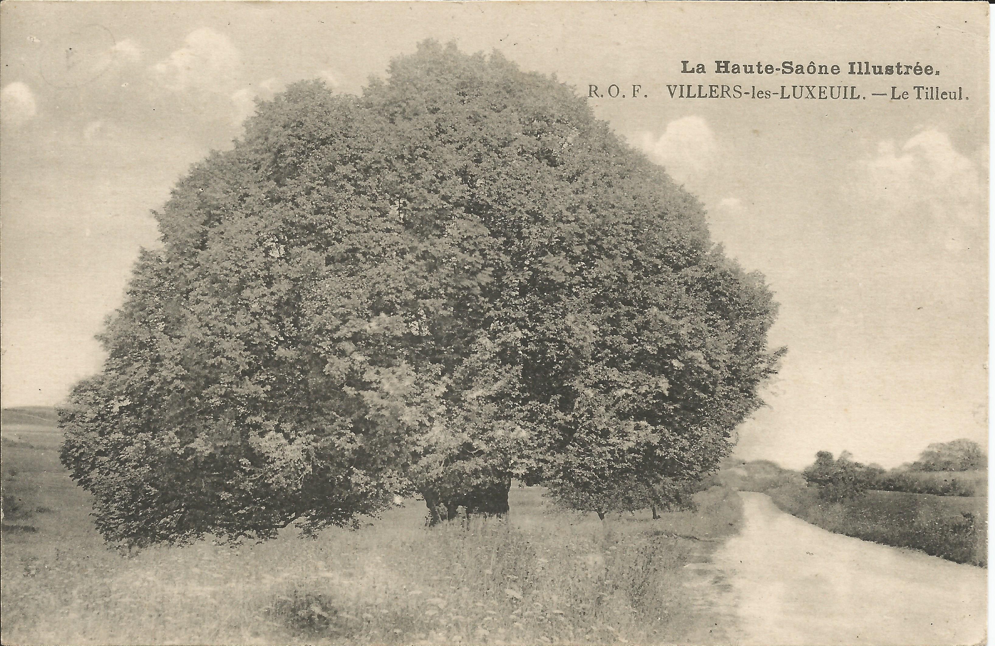 https://www.villers-les-luxeuil.com/projets/villers/files/images/Cartes_postales/Tilleul_2015/Le_Tilleul_4.jpg