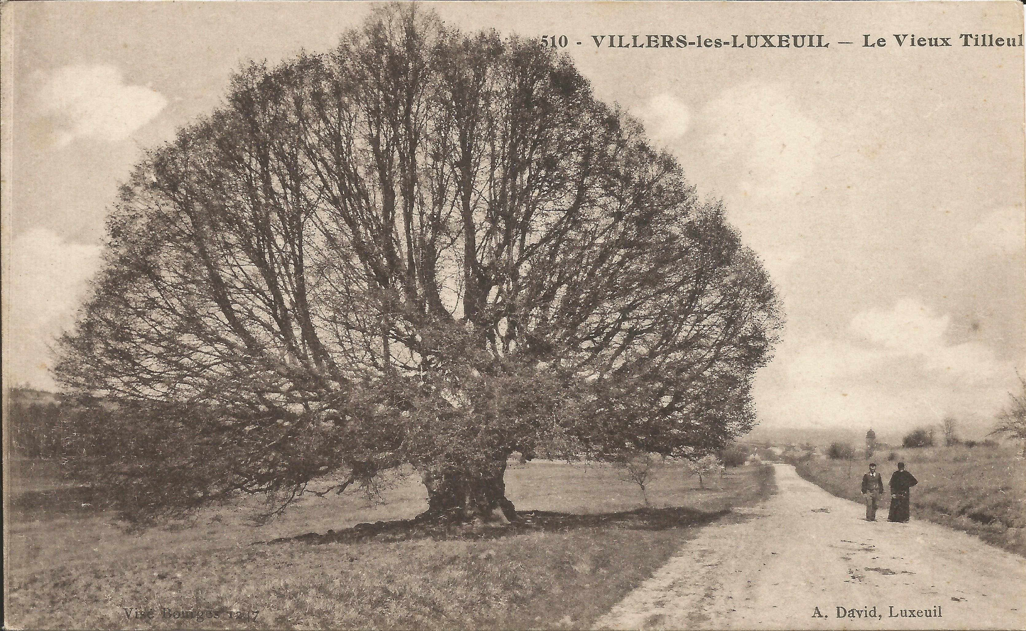 https://www.villers-les-luxeuil.com/projets/villers/files/images/Cartes_postales/Tilleul_2015/Le_Tilleul_8.jpg